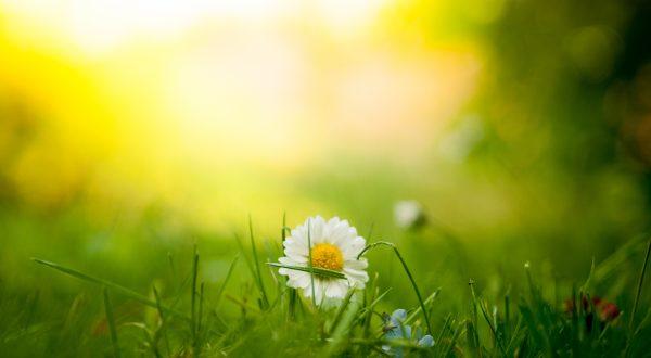 Vitamin D & Sonne – positive Effekte