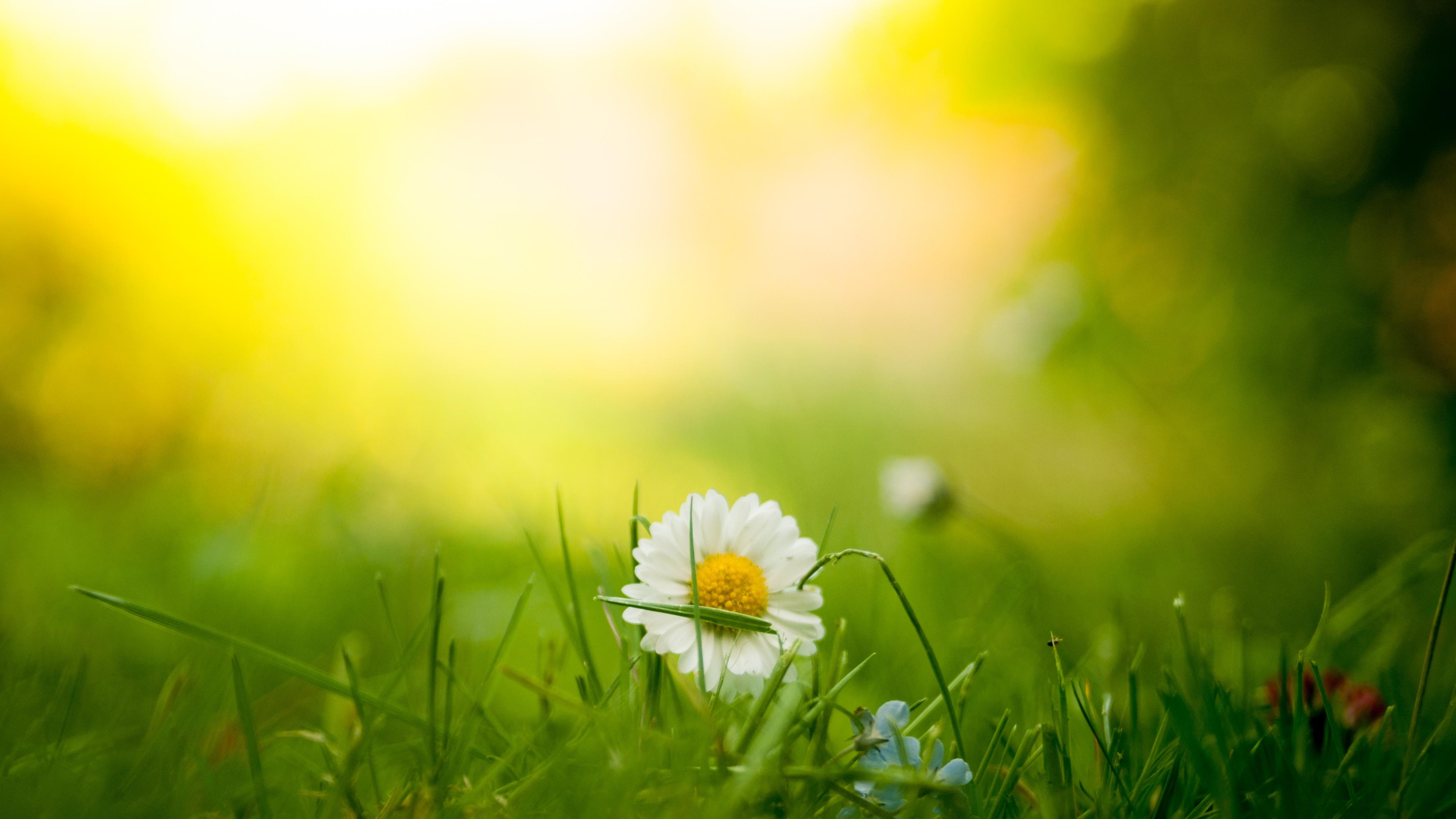 Vitamin D & Sonne - positive Effekte