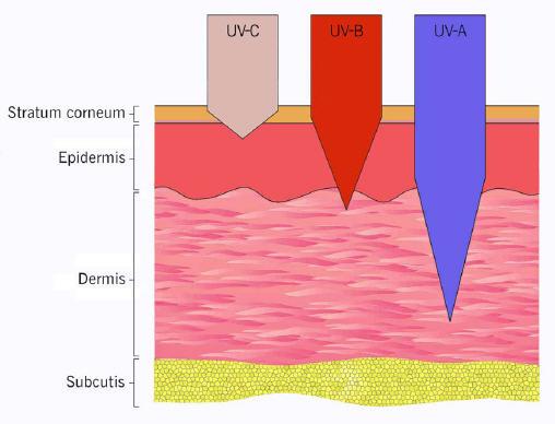 Eindringtiefe UV-A-, UV-B- und UV-C-Strahlungeindringtiefe-derma