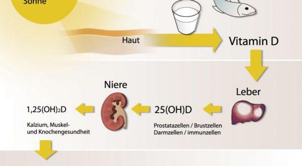 Vitamin D – Stoffwechsel