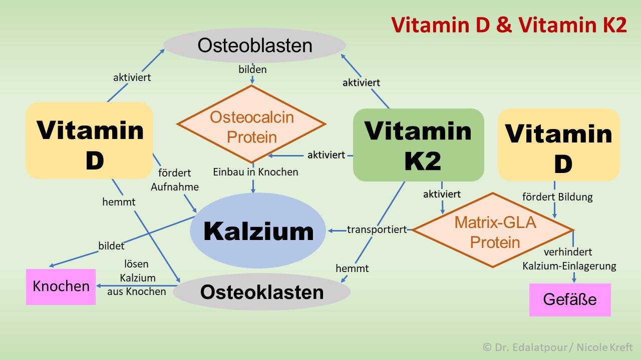 Vitamin K2 Der Knochenbooster Und Gefäßreiniger Sonnenallianz