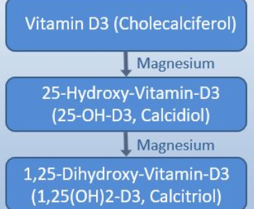 Magnesium – der Vitamin D-Aktivator