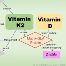Vitamin K2 – der Knochenbooster und Gefäßreiniger