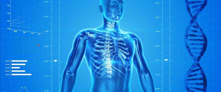 Knochen, Muskeln und Sturzgefahr