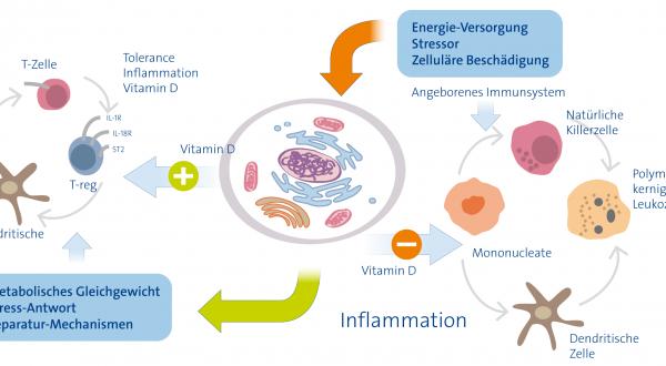 Immunsystem hochfahren mit Vitamin D