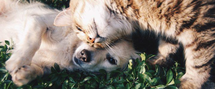 Vitamin D bei Haustieren